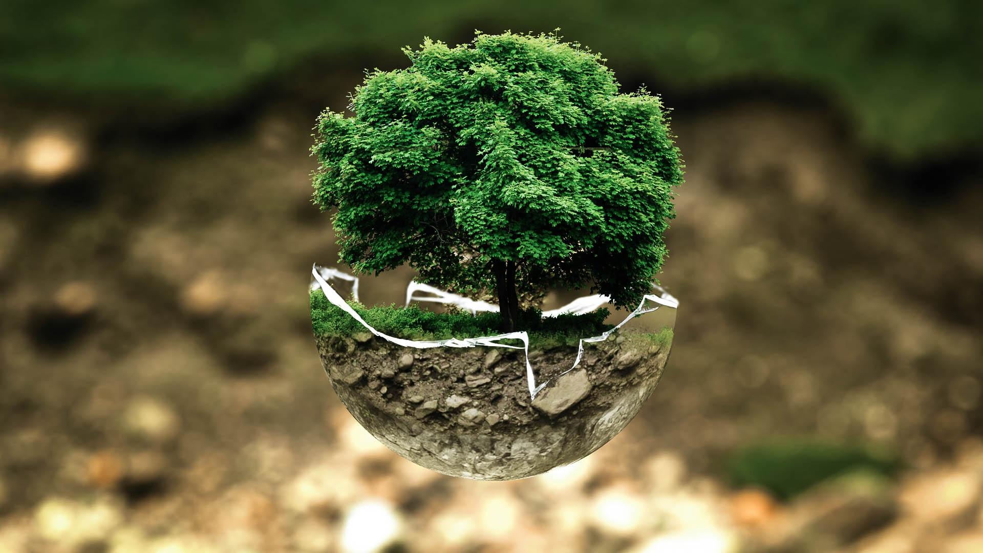 Buenas prácticas en las empresas para el cuidado del medio ambiente