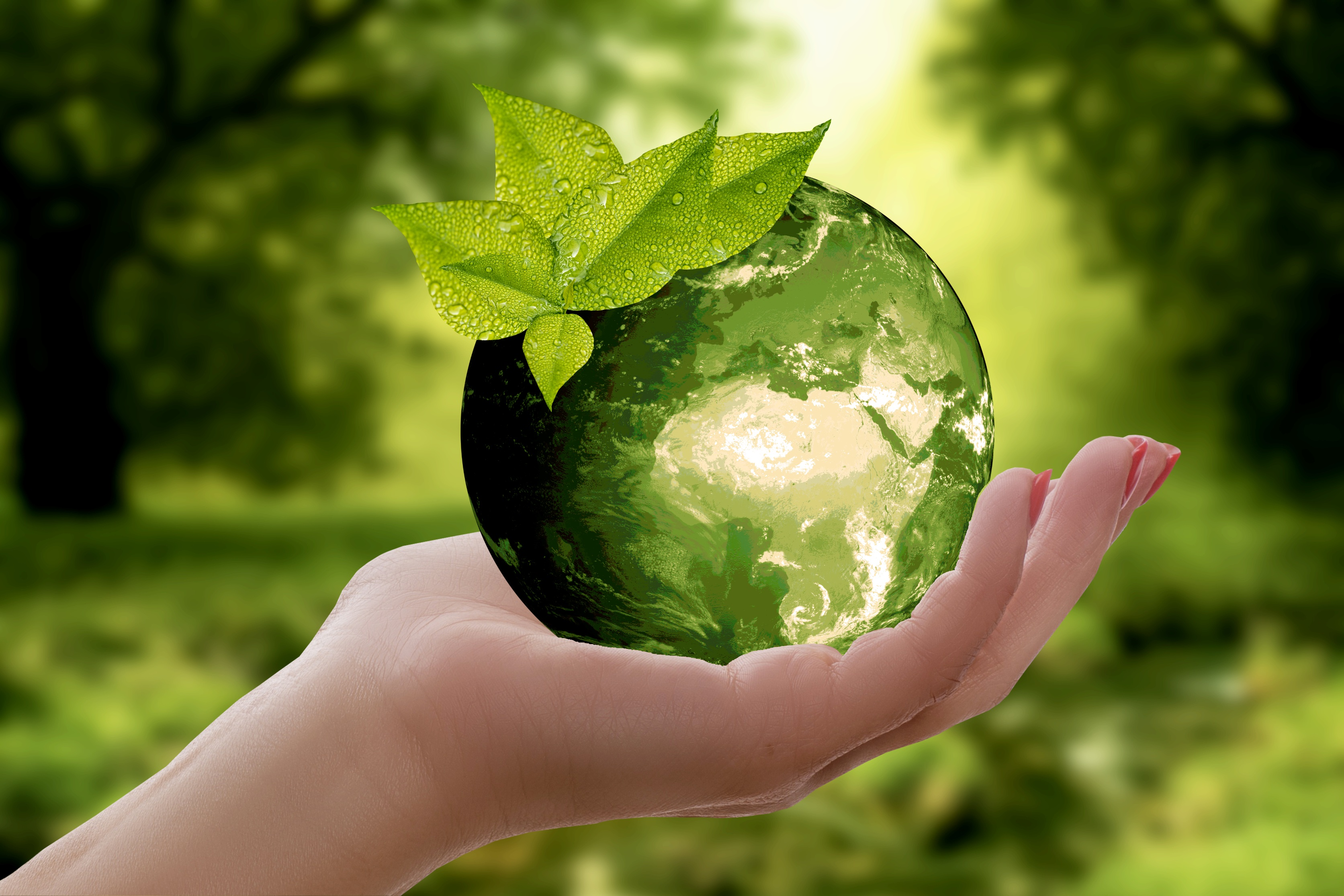 Empresas sostenibles que conservan el medio ambiente
